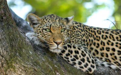 Luxury Safari in South Africa