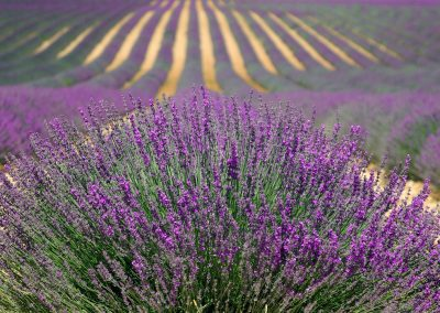 Newcomers Cruise Burgundy & Provence
