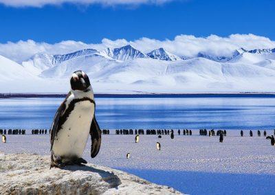 Antarctica & South America with Celebrity Cruises